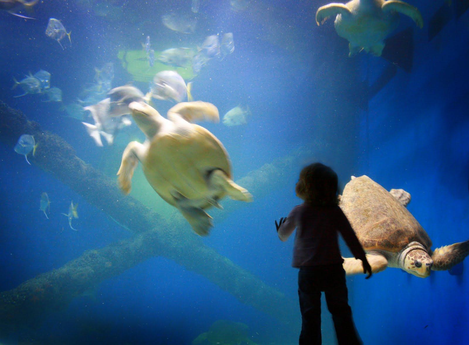John Emily Jones Virginia Beach Aquarium