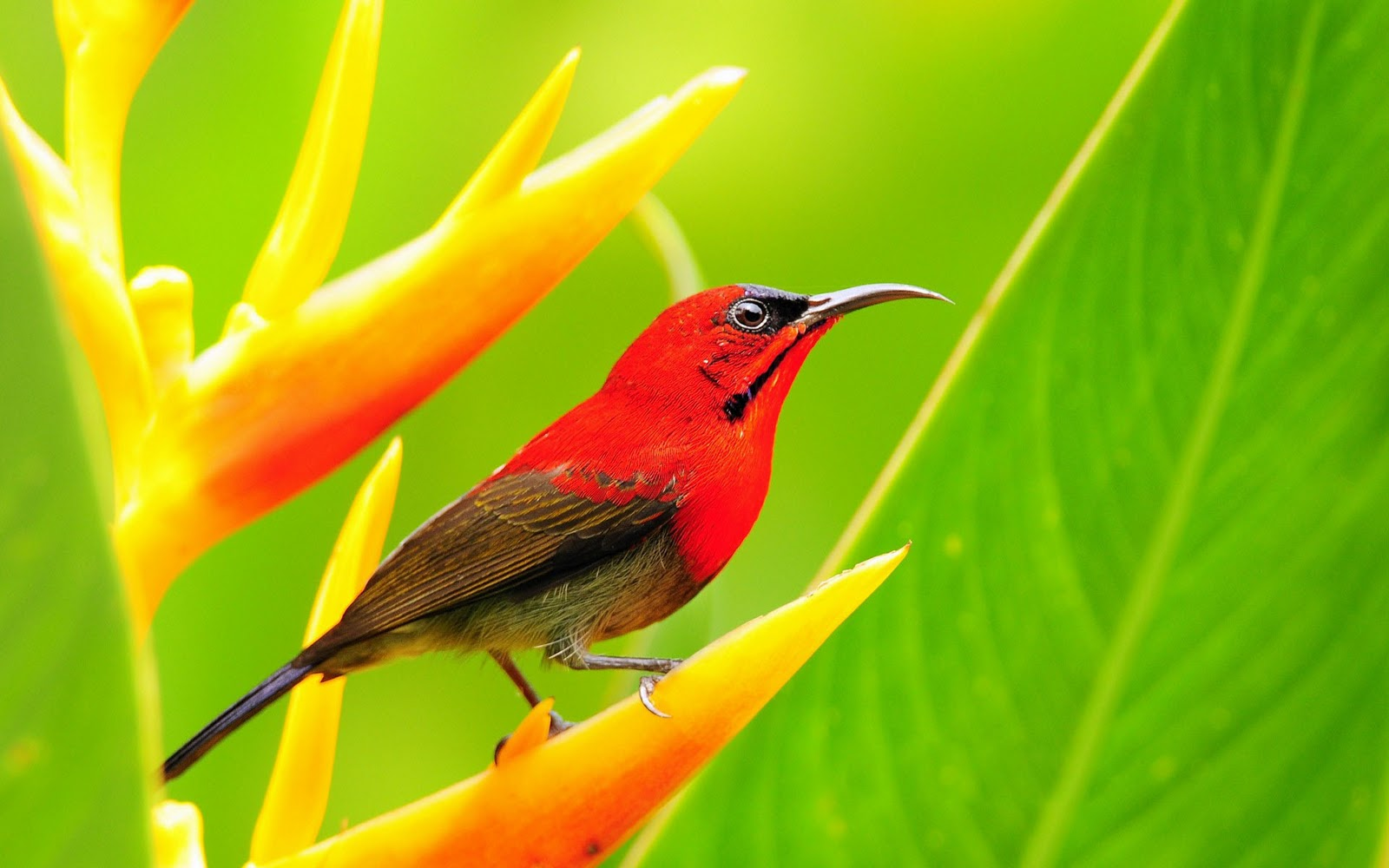 Bird wallpaper birds wallpaper desktop wallpaper tweety bird
