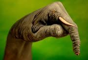 Elephant on hand