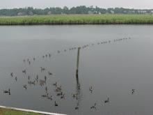 Brice's Creek