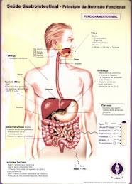 Saúde Gastrointestinal