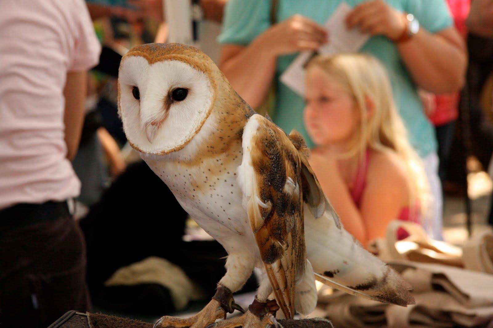 Hosting the Ojai Valley Lavender Festival 6/26/10, owl and girl