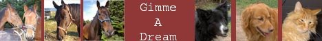 Gimme A Dream