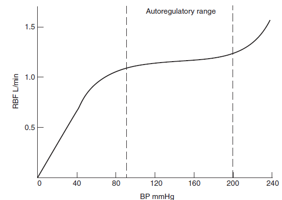 renal regulation of blood osmolarity The high osmolarity in the renal medulla allows for the potential for quick reabsorption of water  because renal blood flow is  comments off on renal physiology.