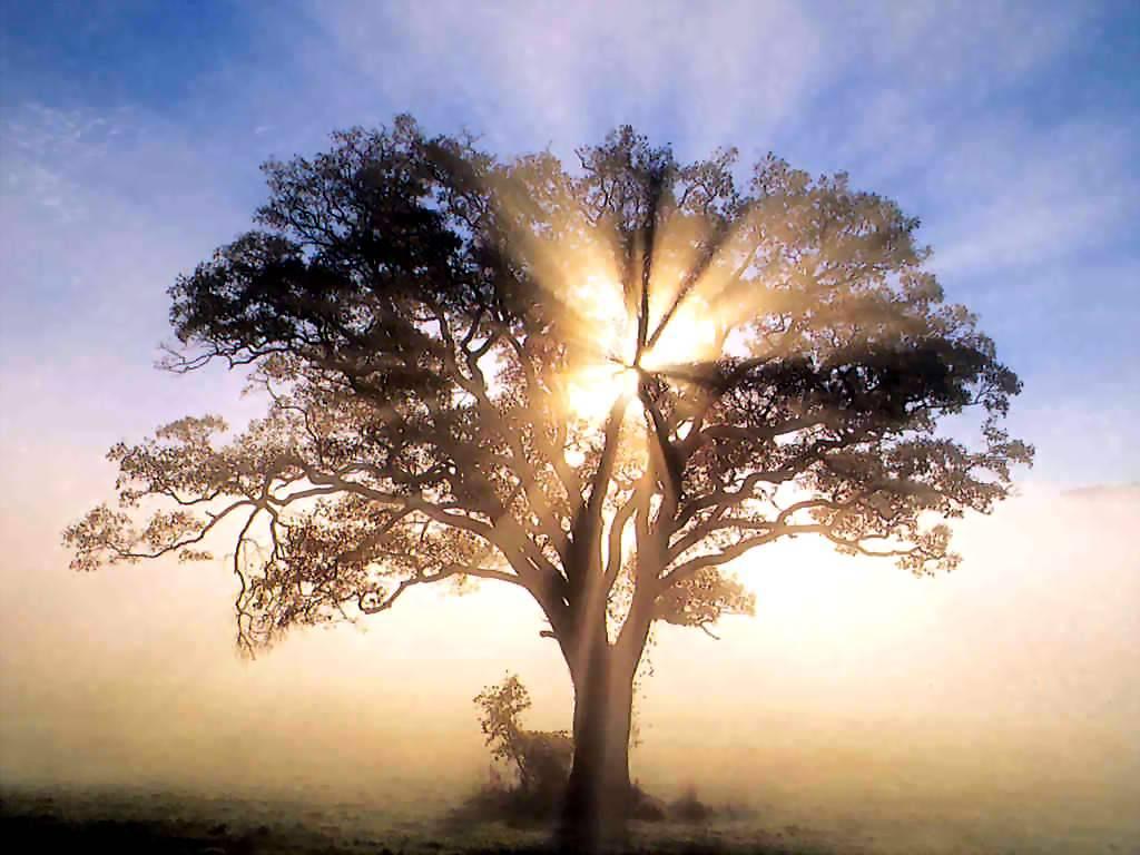 http://2.bp.blogspot.com/_WUFYpUkn_dc/TFlVM9EnZmI/AAAAAAAAG4A/4_SmH78jbxM/s1600/spiritual+abundance.jpg