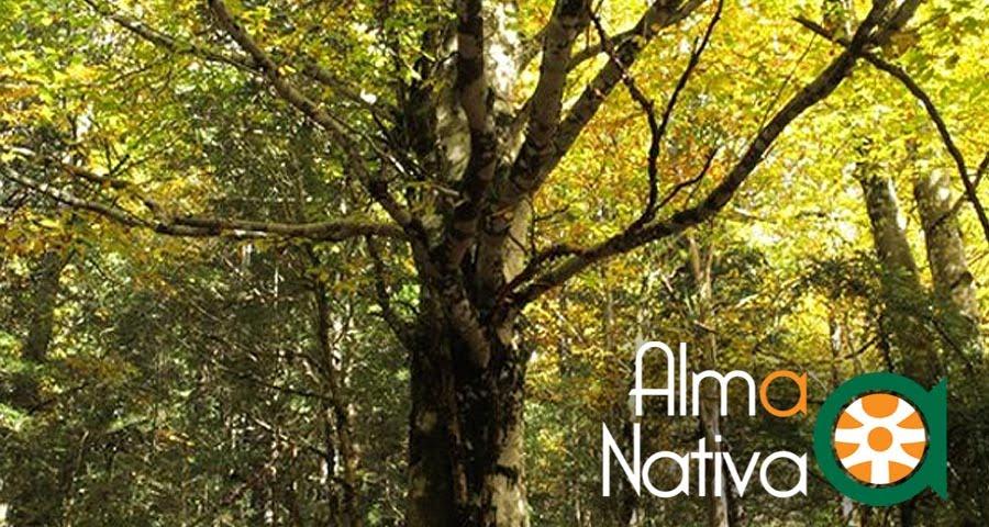 Alma Nativa