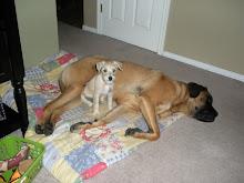Daisy & Cooper