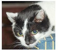 Dedico este blog a mis gatos consentidos: Tito, Martín y Gatín