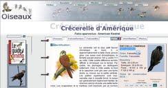 http://www.oiseaux.net/oiseaux/crécerelle.d.amérique.html