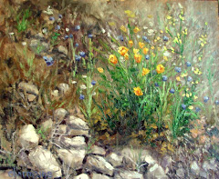 Wildflowers in My Hills
