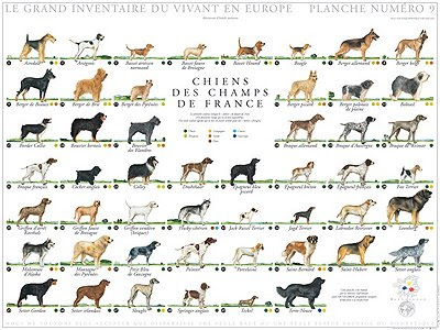 the target dog breed. dog breeds of world poster.