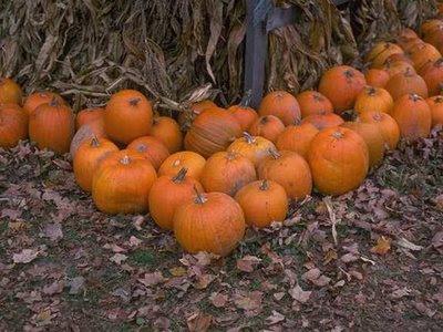 NAMC montessori harvest festival activities vegetables pumpkins