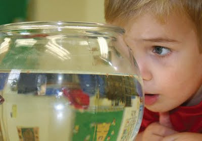 NAMC montessori education nurturing concentration in child first place of development looking at fish