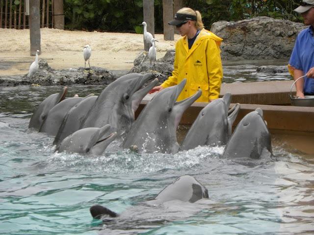 Dolphins Seaworld Orlando