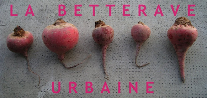 la betterave urbaine