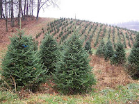 green christmas trees