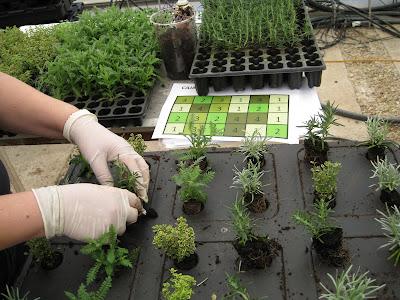 Jardin vertical sostenible
