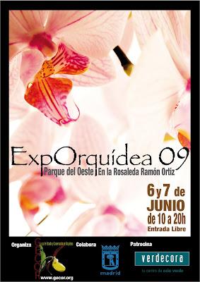 Exporquidea