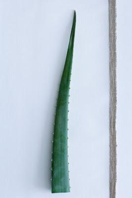planta de julio