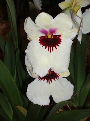 orquideas parque del oeste