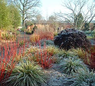 GardenDesigns+more: Plants for Winter Interest