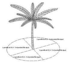 Red Palm Weevil Rhynchophorus