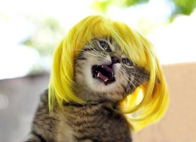 http://2.bp.blogspot.com/_WlsKqZBqaqA/SuYB8wgeaSI/AAAAAAAAAkM/oCVrHRrYahI/s400/Cat+Wigs+004.jpg