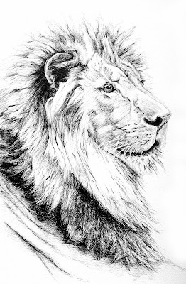 Pencil drawings of lions - photo#15