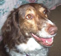 RIP Lady 04/08/1998-03/01/2011