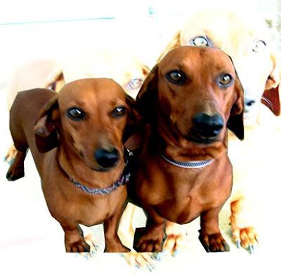 los perros