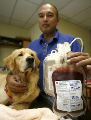 sangre perros