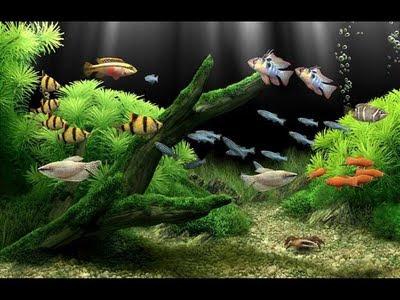 alimentacion peces