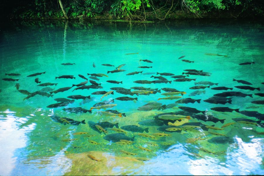 Bonito Brazil  city photos gallery : Discovering Brazil: Bonito Mato Grosso do Sul