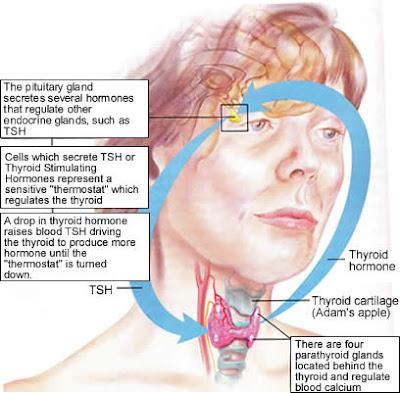 ipertiroidismo autoimmune