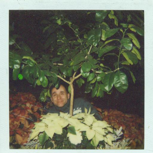 Dad hiding behind Opryland Tree