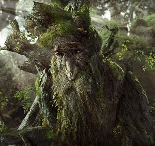 Uma das Árvores mais antigas do Planeta