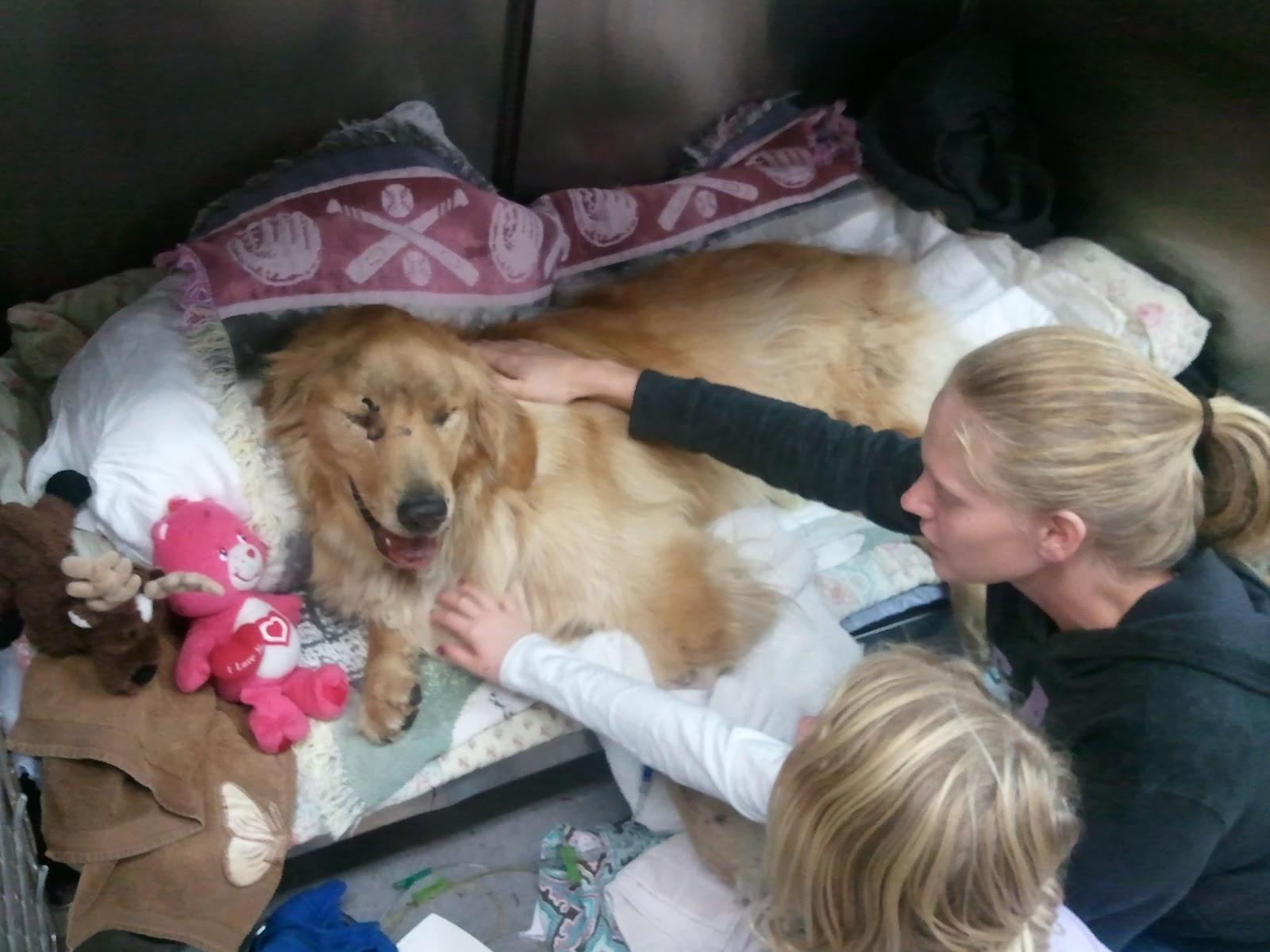 Animal Emergency Clinic Daytona Beach