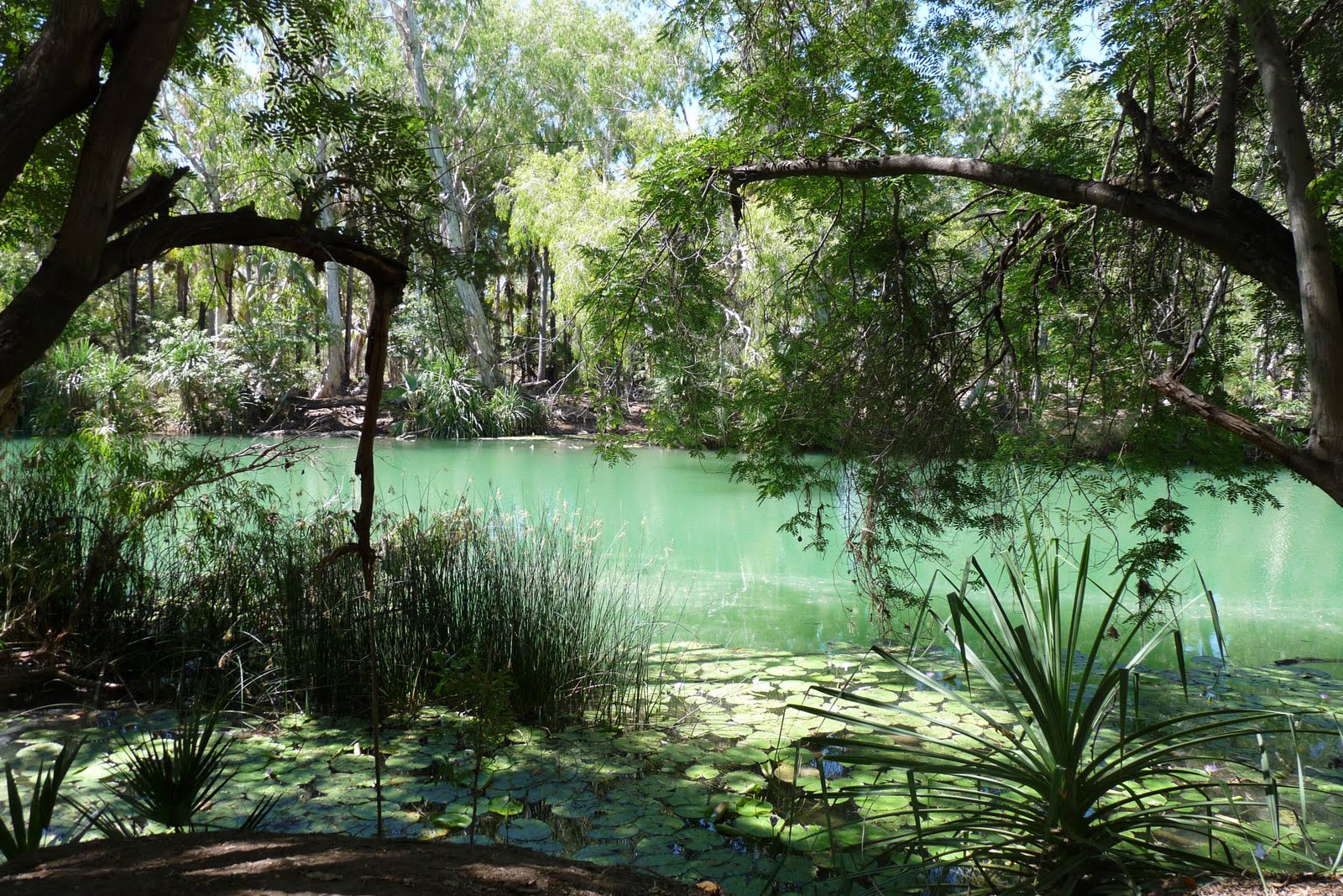 PICTURESQUE ADELS GROVE QLD