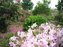 """Deixe a vida fazer com você, o que a primavera faz com as flores..."""""""