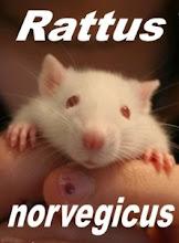 Comunidade no Orkut Rattus rattus/Rattus norvegicus