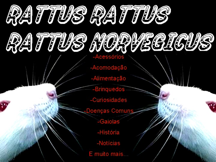 Rattus rattus - Rattus norvegicus