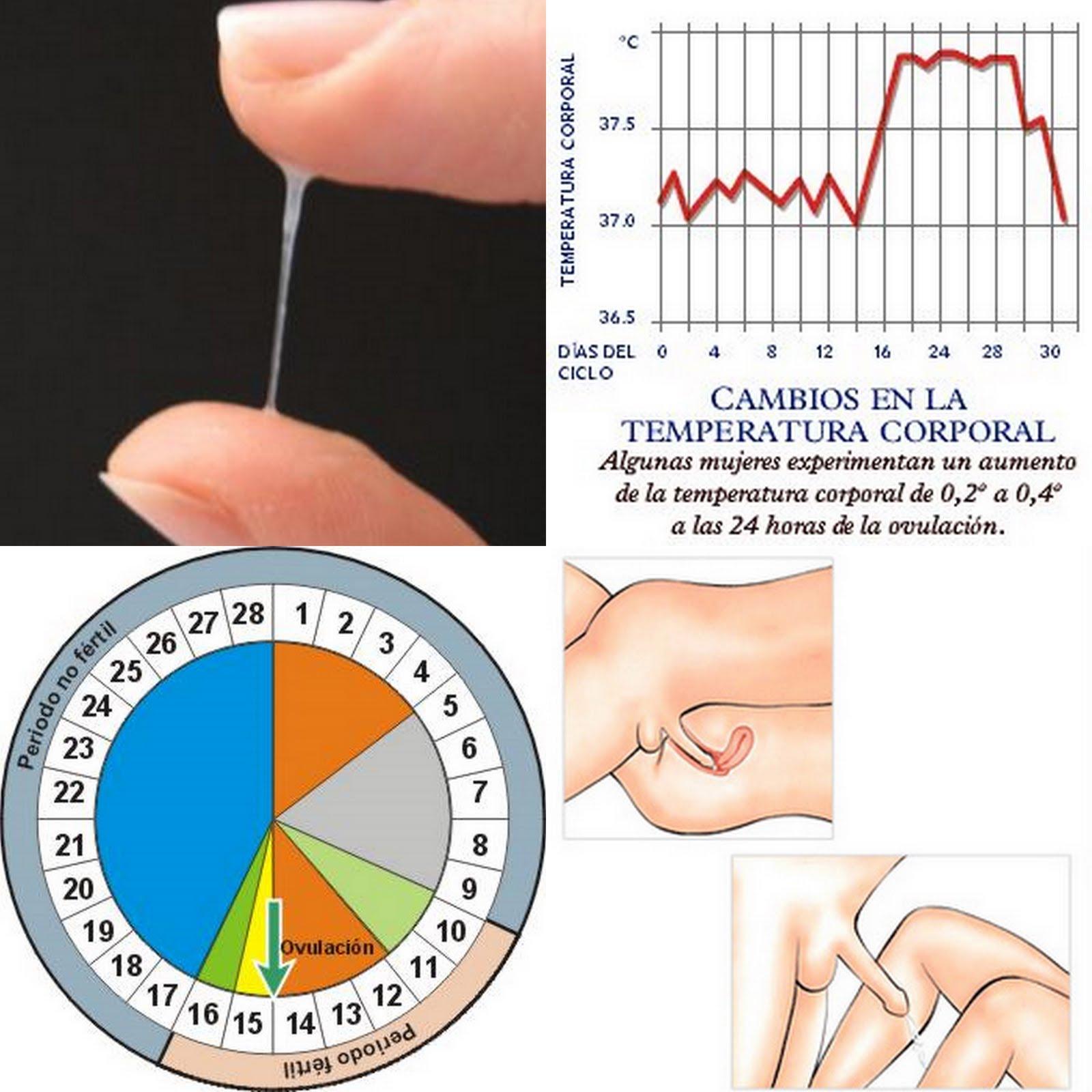 Las causas del moco en la orina El tratamiento de moco