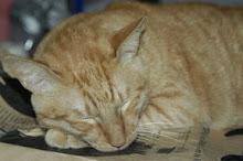 沈睡中的貓