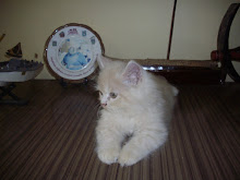 """Matata"" the male brown kitten that i have retained in my house-hold of pets."