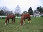 Horse Placement Program, below picture of Cody and new friend Peppy