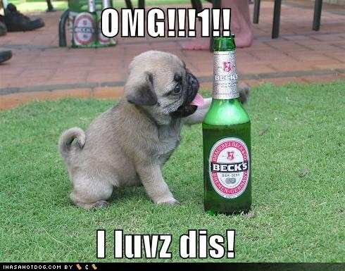 funny kids picture,funny people-funny-dog-pictures-pug-loves-beer