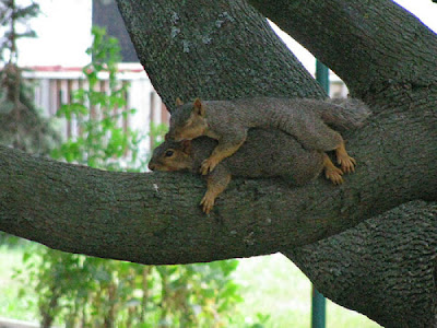 The Laziest Squirrels In The World Seen On www.coolpicturegallery.net