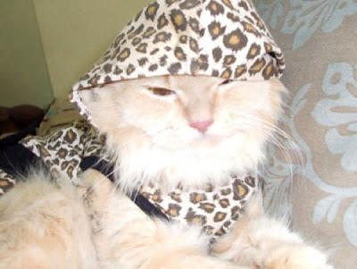 Cute Kittens In Hoodies Seen On www.coolpicturegallery.us