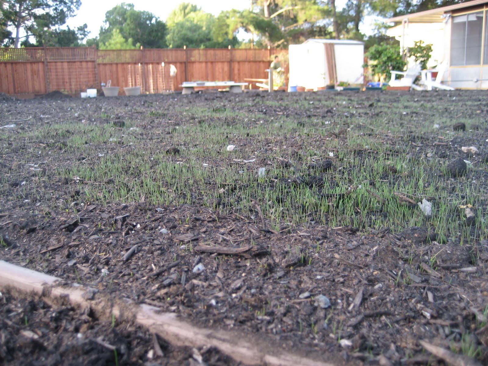 how to grow a small ammount of grass