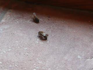 Due api nella stanza